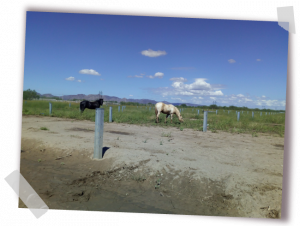Horses at the Bluemex PV plant in Mexico by GRS