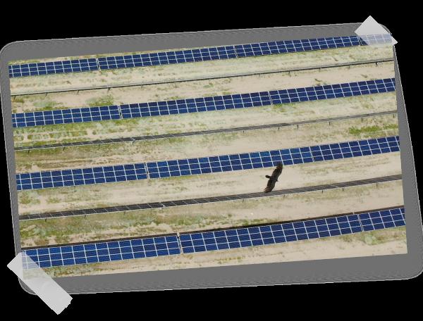 Eagle flying over La Laguna PV plant in Mexico
