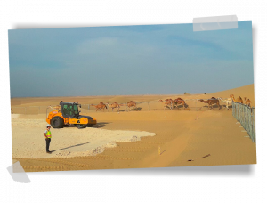 Camels in the Dubai desert during the construction of a GRS photovoltaic plant.