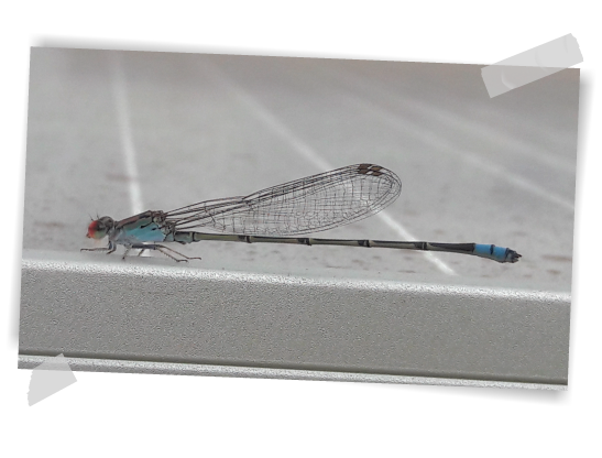Dragonfly in a GRS PV plant Brazil