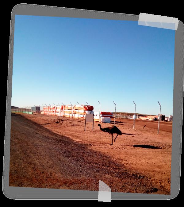 Emu in an australian pv plant by GRS