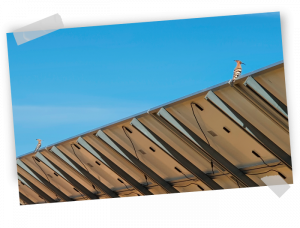 Hoopoes in an spanish solar plant by GRS